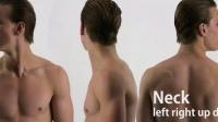 动态人体结构参考-脖子