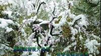 TSH视频田  雪景 歌曲 我爱你塞北的雪 原唱 郭兰英 31