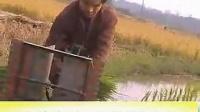 小型手拔秧插秧机   13460430059