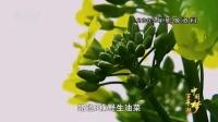 《百年潮·中国梦》第三集  中国精神