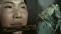 (1962),笛子独奏:《荫中鸟》刘管乐 曲