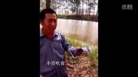 渔愉鱼泼洒姜-江苏阜宁案例:诱食吃食