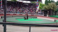 上海野生动物园2014.05.24俄罗斯力量杂技