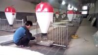 保育栏干湿料槽养猪设备自动料线产床