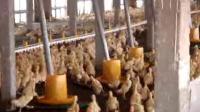 1商品肉鸭水料线 (2)