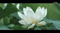 开封花艺轩时尚婚礼  追影视觉6.23————即时剪辑