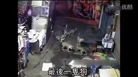 7恶犬街头猎杀野猫 分尸野猫