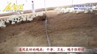 山东发酵床养鸭实拍:通风良好与通风不良的发酵床对比