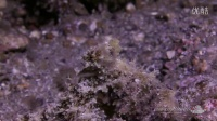 Critters of the Lembeh Strait 02 - 2014