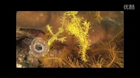 Lembeh Resort - Promo video english