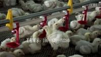 自动化养鸡设备、养鸡水线料线设备生产厂家