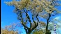 笛子音乐 幽兰逢春