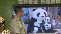 8月19日熊猫三胞胎直播