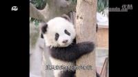 我是熊猫第01期