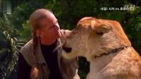 世界最大的老虎(Big liger))真实面目