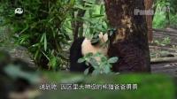 熊猫日记第02期-探访雨后的熊猫园区