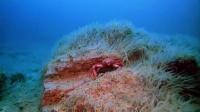 奇妙的海底世界_201409102116