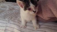日本人收养小猫一个月的记录