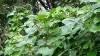 沙口集视频2014.09.16下雨持续多日记录