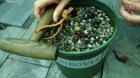 [吉普园艺视频]园艺工具试用