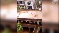 2014.9.15实拍邻水御临镇洪灾及镇中心小学被淹实况