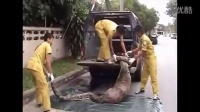▶ 泰国一只大型蟒蛇吞食一个人现场实录