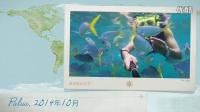 Palua—美人鱼水道喂鱼预告片