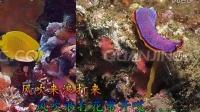 TSH视频田 经典老歌 珊瑚颂225