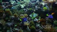 热带珊瑚礁(4K)