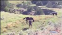 意外瞬间系列(动物攻击、伤人) 2014 HD