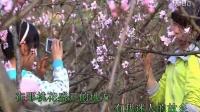TSH视频田 在那桃花盛开的地方 原唱 刘紫玲295