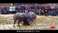 牛在江湖0629第04期