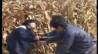 民间小调(猪圈养娘)-2