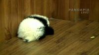 20141101-月亮产房-毛毛一家和小伙伴们 直播录像03
