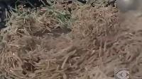 河北石家庄国营第二棉纺织厂怀旧经典纪录片_标清