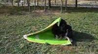 孙行者冬钓帐篷折叠方法
