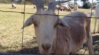 【雪妍拍客】第一期 - 澳大利亚农场动物大竞猜,你认识他吗?