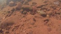 西双版纳某溪流水下摄影02