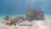 全世界最大的海底雕塑