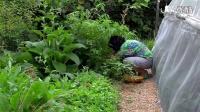 【杰夫罗顿】第十二集 400平米四季不断200种食用植物