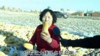 龙江富裕讷河地区龙高L2田间录像