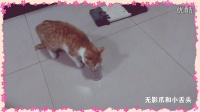 流浪猫日记1