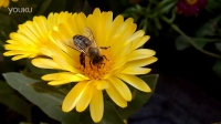 魅族MX2拍摄蜜蜂
