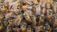 一六顺蜂土蜂业(中蜂、土蜂蜜)49