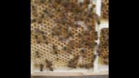 一六顺蜂土蜂业(中蜂、土蜂蜜)50