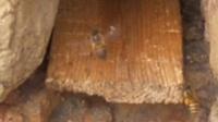 一六顺蜂土蜂业(中蜂、土蜂蜜)58