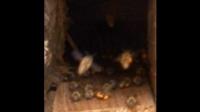 一六顺蜂土蜂业(中蜂、土蜂蜜)57