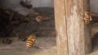 一六顺蜂土蜂业(中蜂、土蜂蜜)63
