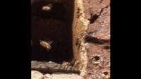 一六顺蜂土蜂业(中蜂、土蜂蜜)65