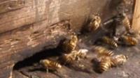 一六顺蜂土蜂业(中蜂、土蜂蜜)56